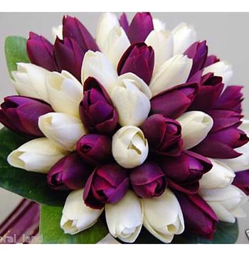fresh flower collections Dubai
